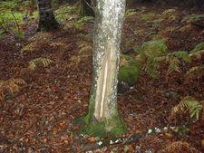 Coupe d 39 am lioration du bois de chauffage - Coupe de bois de chauffage sur pied a vendre ...